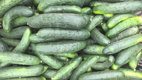 Cucumbers 101:Different Kinds & How to Use Them