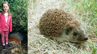 Lauren's Hedgehog House