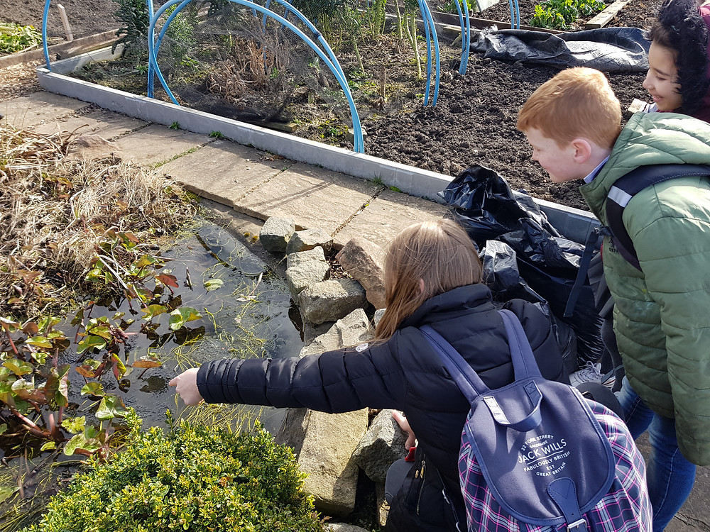 P3 children looking at tadpoles in a pond