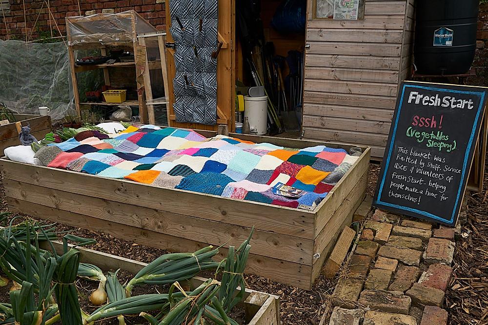 Sleeping vegetables in the vegetable bed on the Fresh Start plot