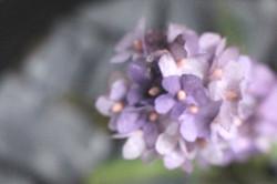 Jardins parisiens fleurs de papier