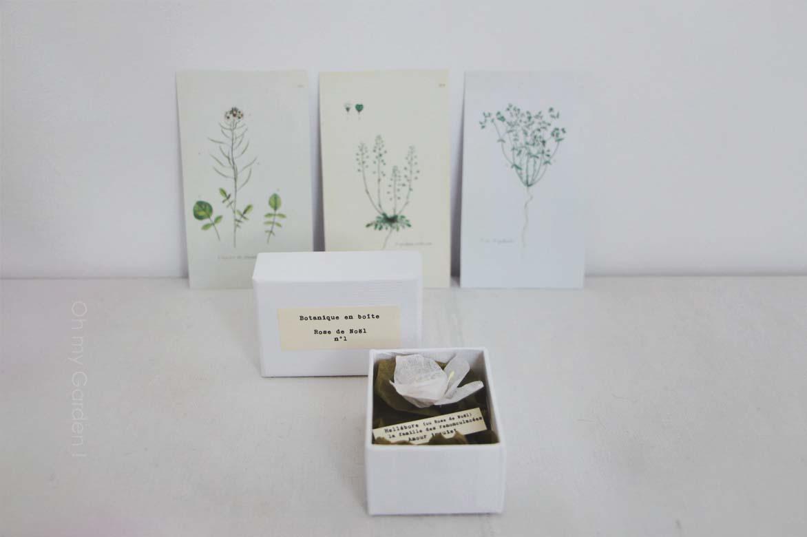 Botanique en boîte hellébore blanche