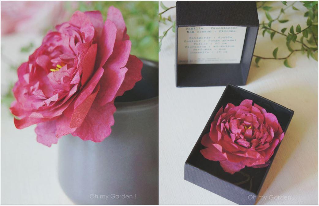 Botanique en boîte pivoine de papier
