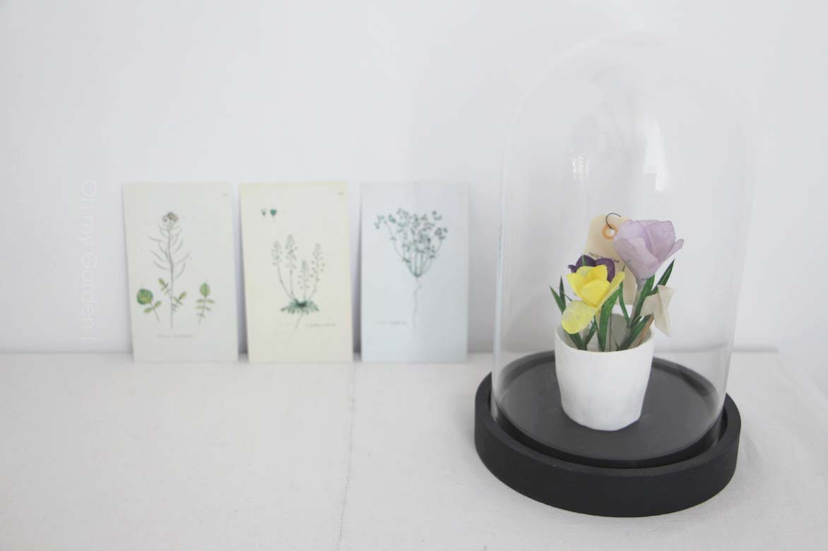 Fleurs à collectionner