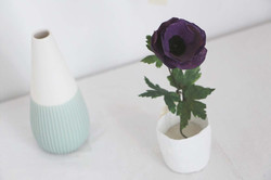 Anémone miniature en pot