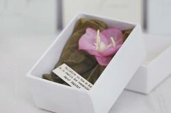 Botanique en boîte Hellébore rose