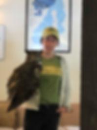 Merlin owl