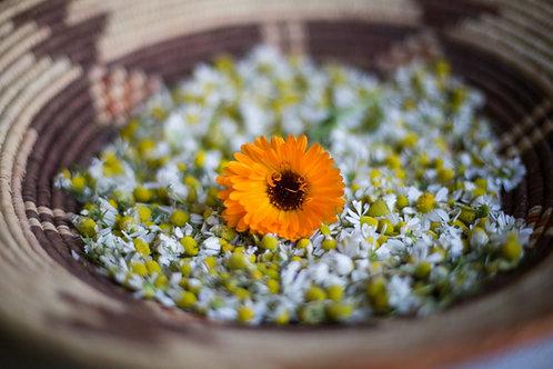 Herbal Allies Zine