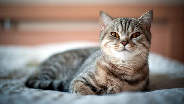 cat-bed-03.jpg