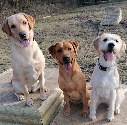 toungue trio.jpg