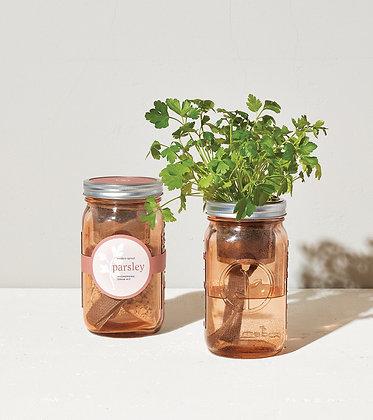 Parsley Garden Jar