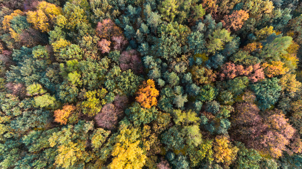 Autumn forest aerial drone view.jpg