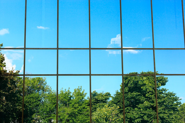 Glass wall. Reflection of trees in the w