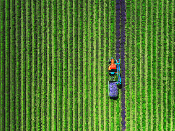 Aerial view of Tractor harvesting field