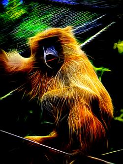 Handfield - Electric Zoo