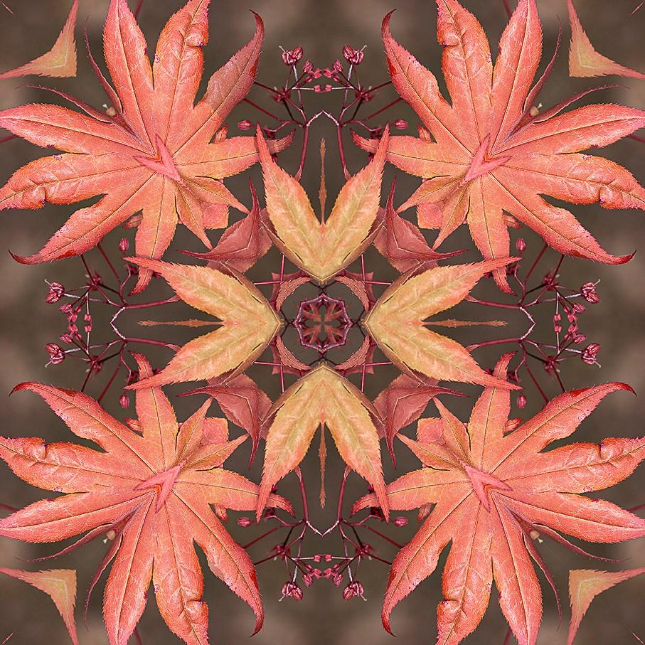 Susan Kaye - Fall Maple Leaves