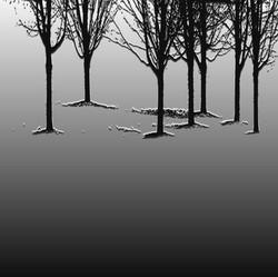 Dan Neuberger - delphi trees
