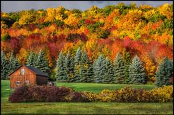Joann Long Upstate Color
