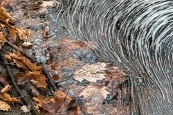 Luann Pero - Pond Swirl & Leaves