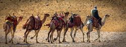 Camel Caravan, Egypt Cherie St
