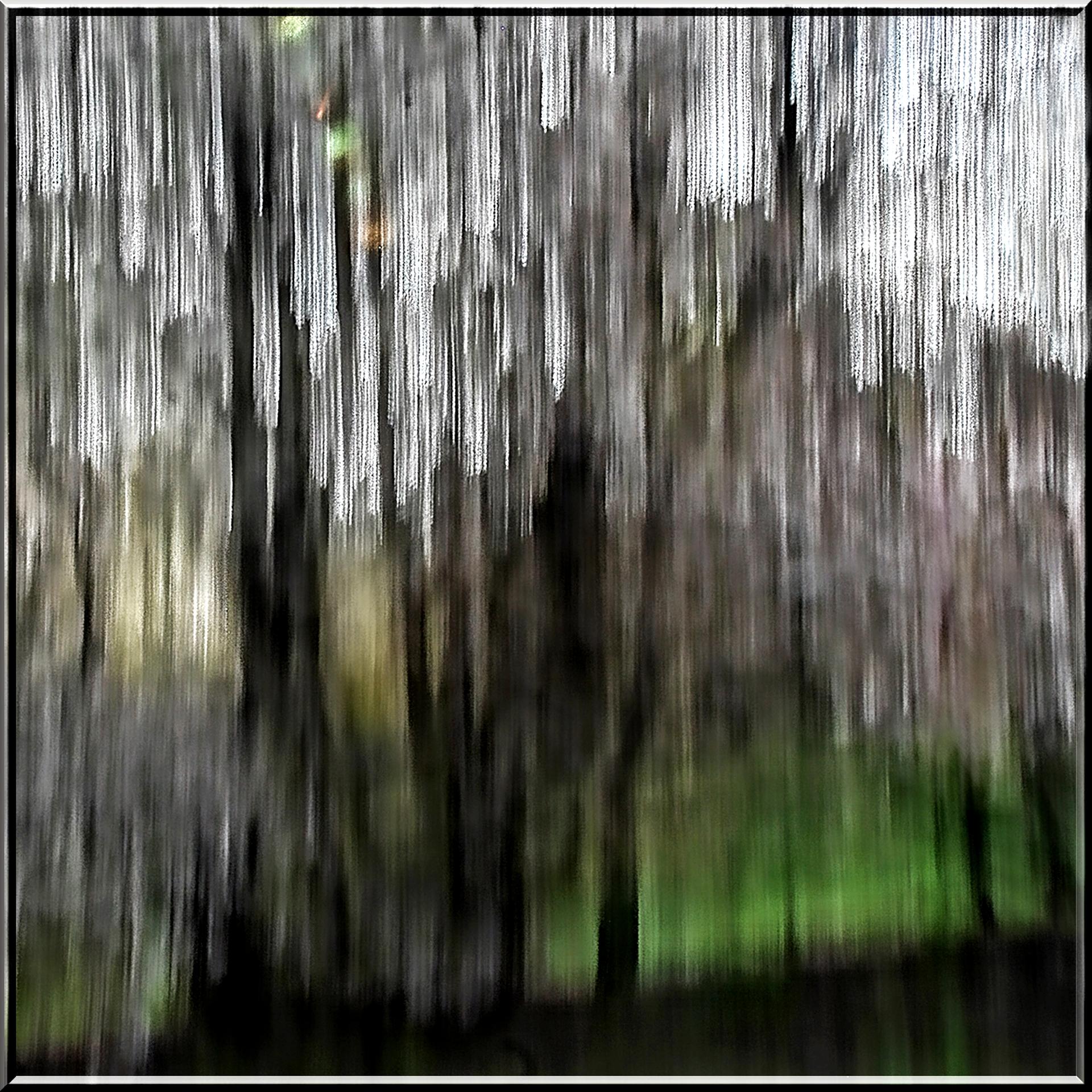 Gamache.RainForest