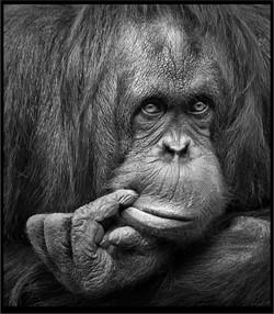 The Thinker; Carol Pustulka; Black and White Photo Print; $119; 16x20; $30