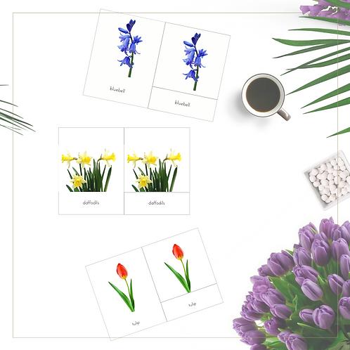 Spring Flowers 3-Part Cards - Montessori - Homeschooling - 3-Part Cards