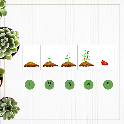Plant Growth Sequencing Cards - Montessori - Homeschooling - Sequencing Cards