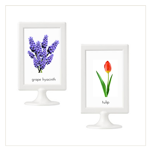Spring Flowers - 10x15 Posters