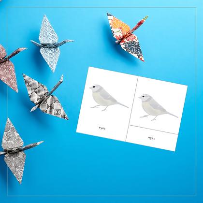 Parts of a Bird 3-Part Cards - Montessori - Homeschooling - 3-Part Cards
