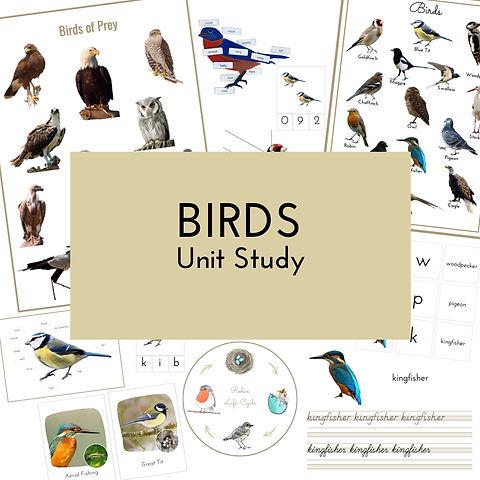Birds Unit Study.jpg