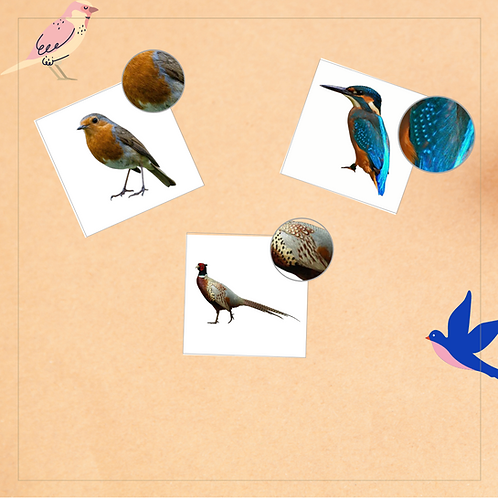 Matching Cards (Birds) - Montessori - Homeschooling - Matching Cards