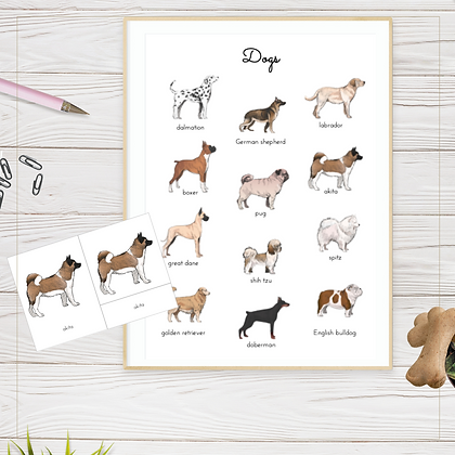 Dogs 3-Part Cards & Poster - Montessori - Homeschooling - 3-Part Cards & Poster