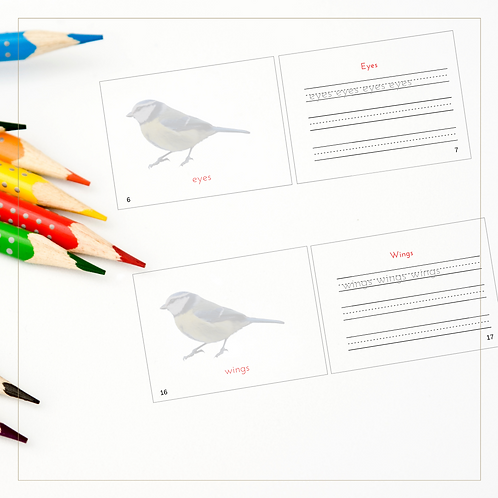 Coloring/Writing Book of Birds - Montessori - Homeschooling - Book