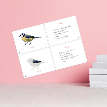 External Parts of a Bird Booklet - Montessori - Homeschooling - Book