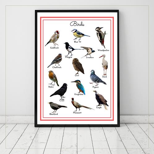Birds A4 Posters - Montessori - Homeschooling - Poster