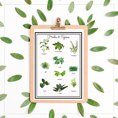 Herbs and Spices A4 Posters - Montessori - Homeschooling - Poster