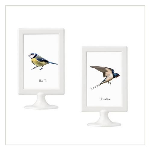10 x 15 CM Posters (Birds) - Montessori - Homeschooling - Poster