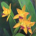 pintura-flores-tienda-online-003.jpg