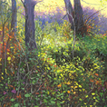 Bosque Nº 04