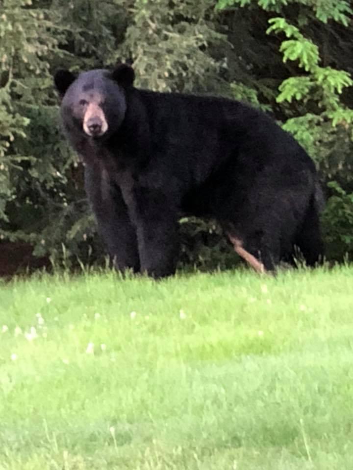 James_Wheaton_Jr._Black_Bear