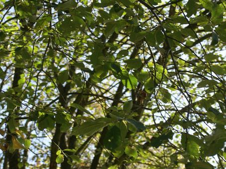Der Weltenlichterbaum stellt sich vor