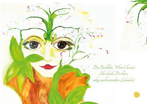 Bachblüte White Chestnut Leinwanddruck