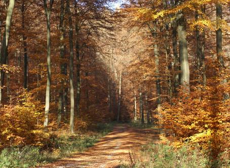 Wenn wir, solange wir leben den Weg der Freude folgen, werden wir am Ende eins mit diesem Weg!