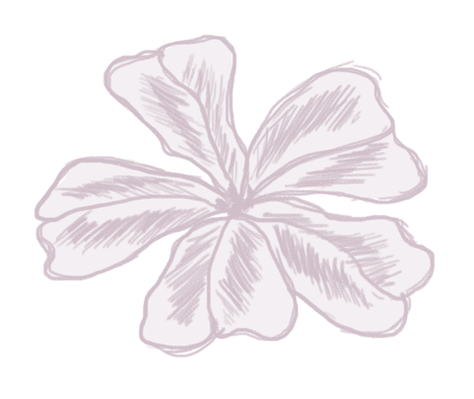 Cerato-Centrum Logo
