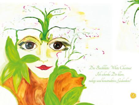 Die Bachblüte der Woche White Chestnut