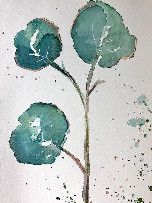 Little Eucalyptus I
