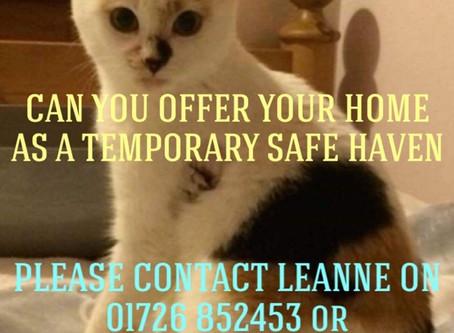 Urgent Fosterers Needed