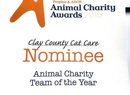 Clay County Cat Care has been nominated for three awards!