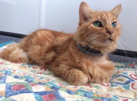 Could you foster a senior cat?